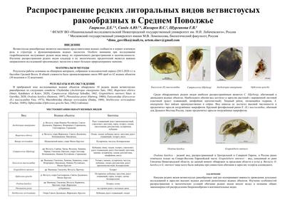 Poster GavrilkoDE