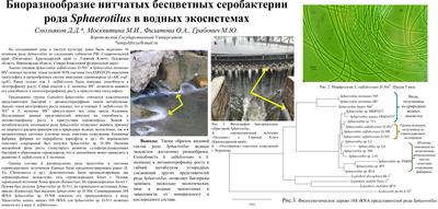 Poster SmolyakovDD